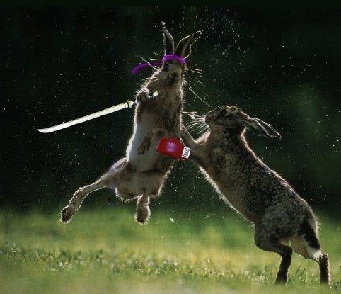 Lute com o coelho!!
