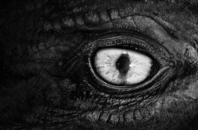 dk eye.jpg